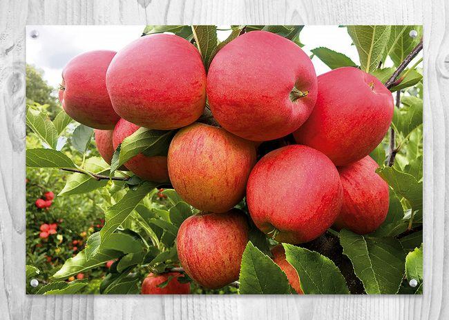 Zdravé ovoce z Bříství