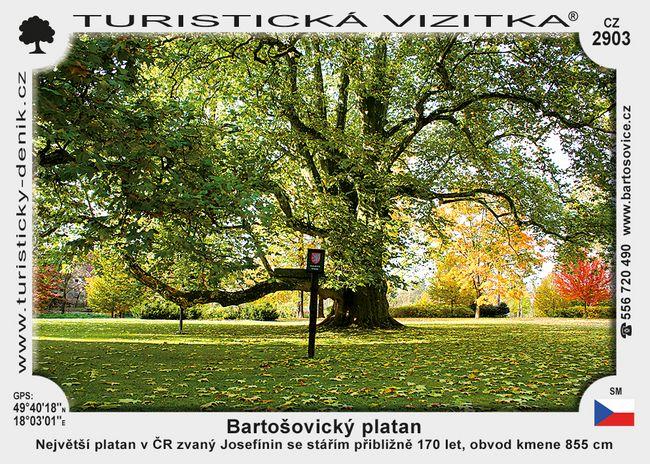 Bartošovický platan