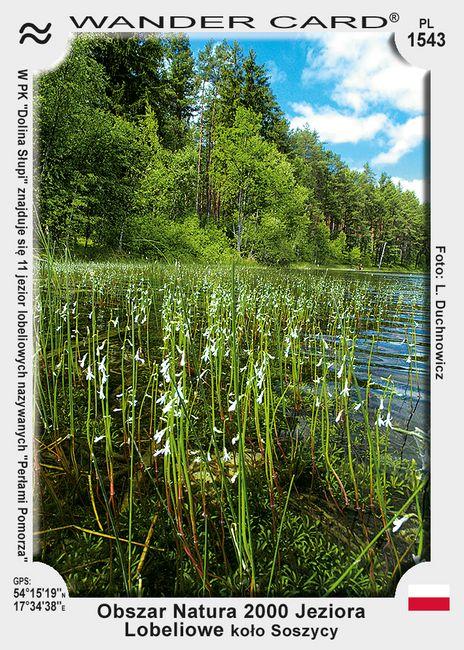 Jeziora Lobeliowe koło Soszycy