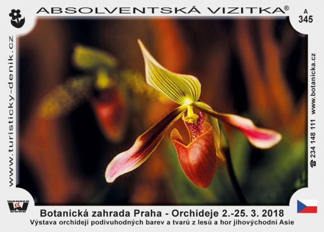 Praha botanická orchideje 2018