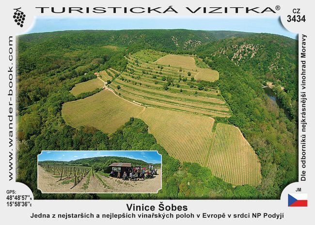 Vinice Šobes