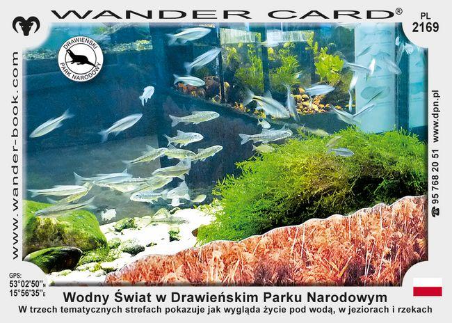 Wodny Świat w Drawieńskim Parku Narodowym