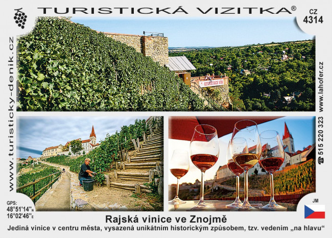 Rajská vinice ve Znojmě