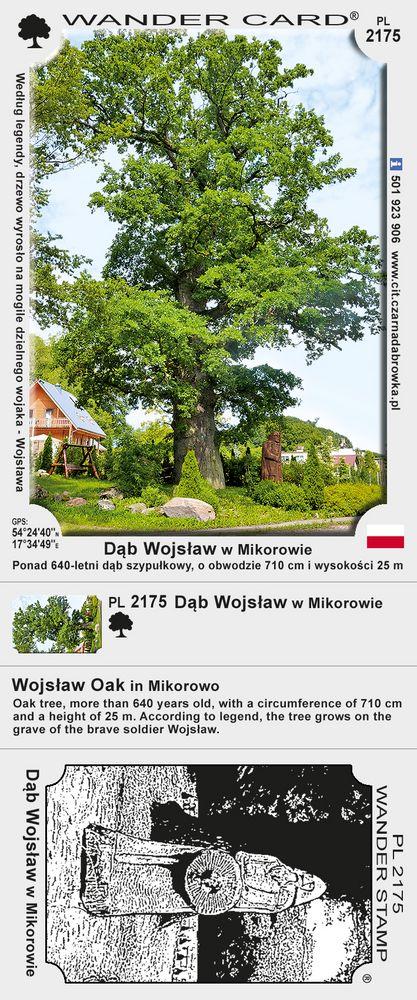 Dąb Wojsław w Mikorowie