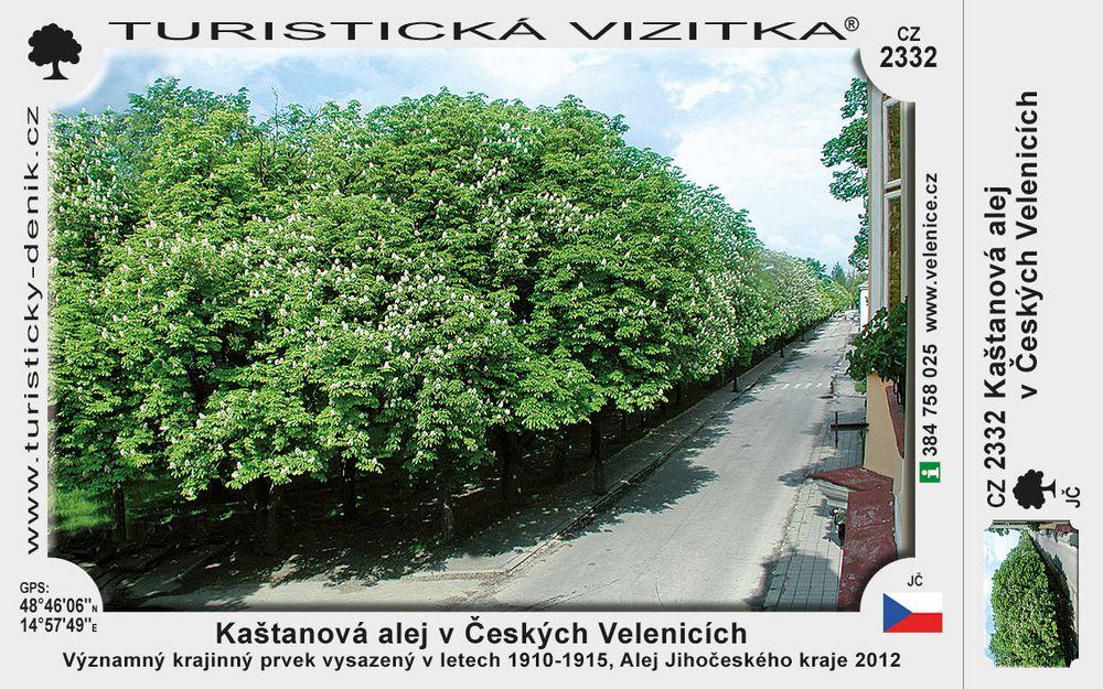 Kaštanová alej v Českých Velenicích