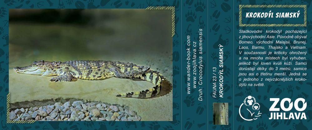 Krokodýl siamský – Zoo Jihlava