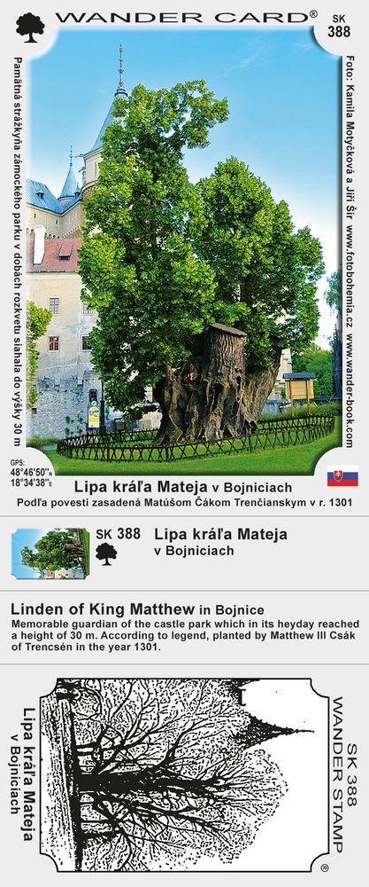 Lipa kráľa Mateja v Bojniciach