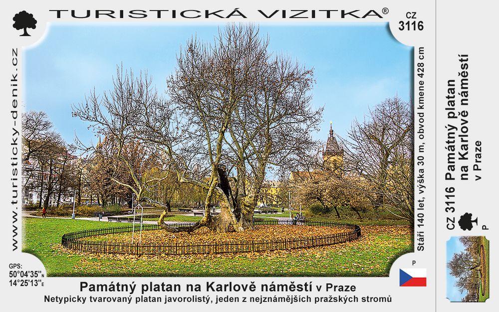 Památný Platan na Karlově nám. v Praze