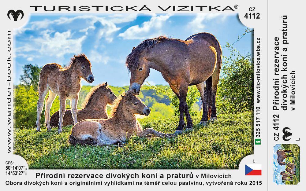 Přírodní rezervace divokých koní a praturů v Milovicích
