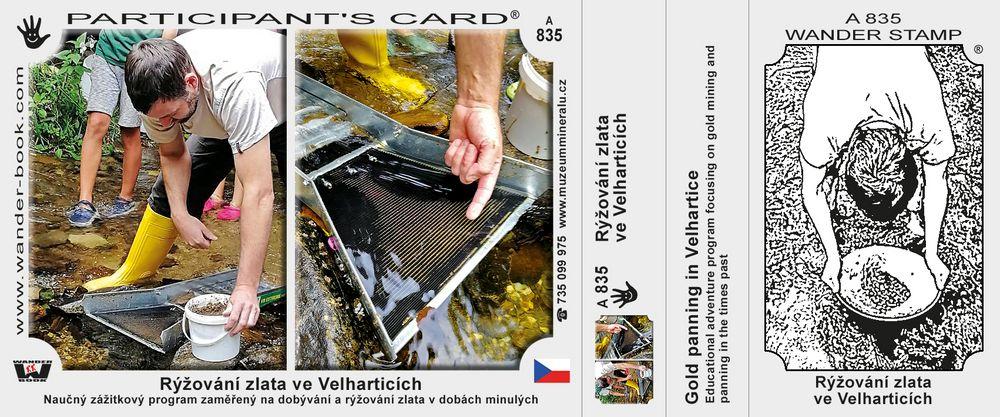 Rýžování zlata ve Velharticích