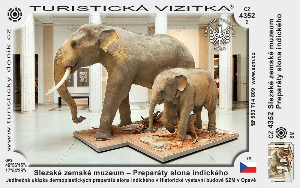 Slezské zemské muzeum – Preparát slona indického