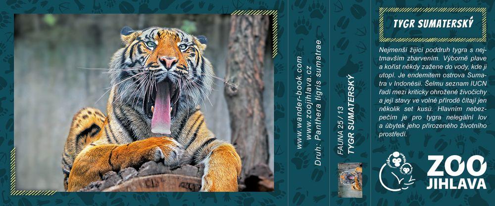 Tygr sumaterský – Zoo Jihlava