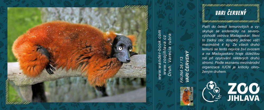 Vari červený – Zoo Jihlava